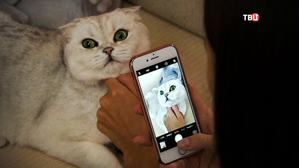 Жизнь животных в соцсетях