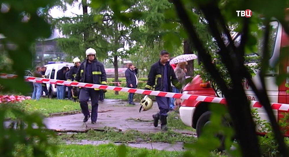 Сотрудники экстренных служб на месте падения дерева на человека