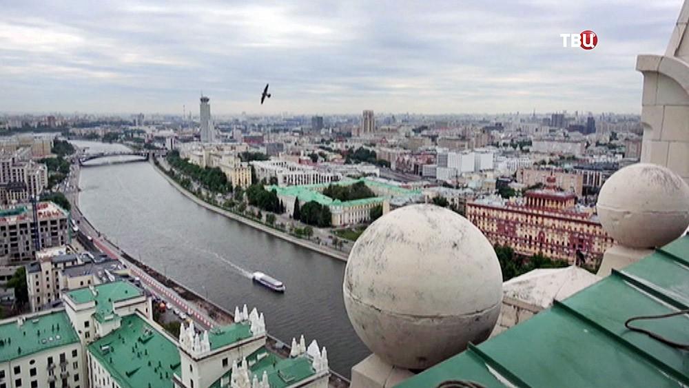 Сокол-сапсан над Москвой