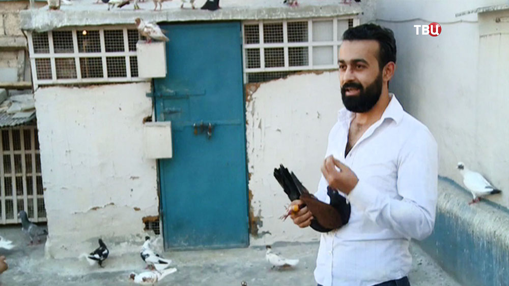 Жители Сирии восстанавливают голубятни