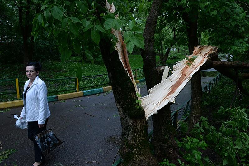 Сломанное ураганом дерево