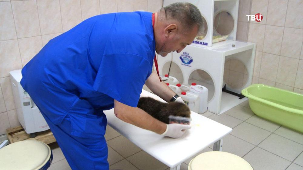 Ветеринары и детёныш калана