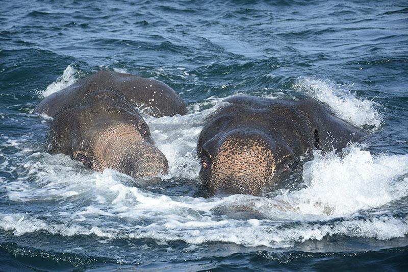 Спасение тонущих слонов