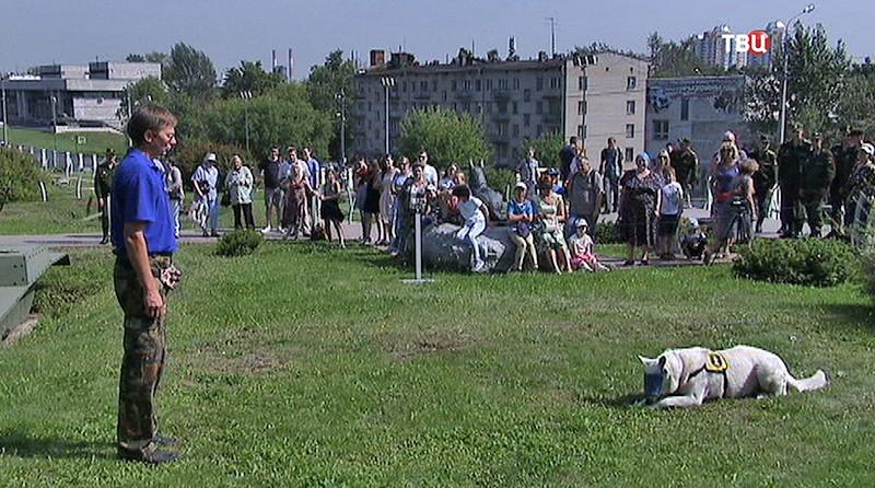 День памяти фронтовой собаки