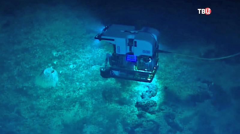 Поиски морских обитателей