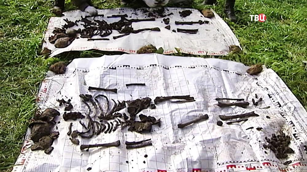 Найденные человеческие останки