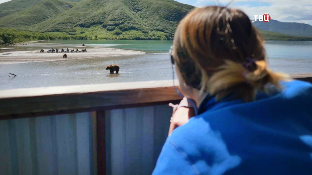 Люди наблюдают за медведями