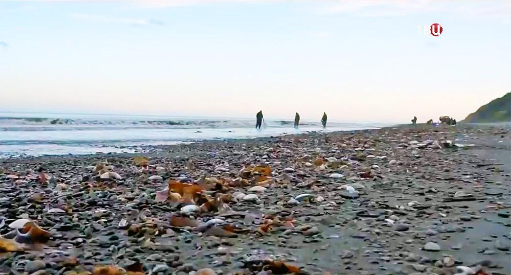 Берег Сахалина