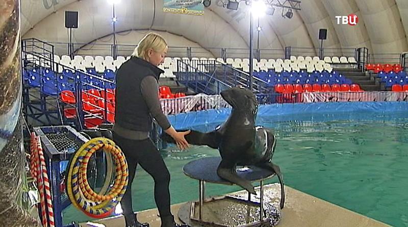 Тренировка с морским котиком