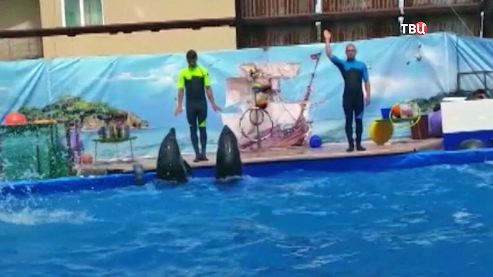 Выступления дельфинов в передвижном дельфинарии