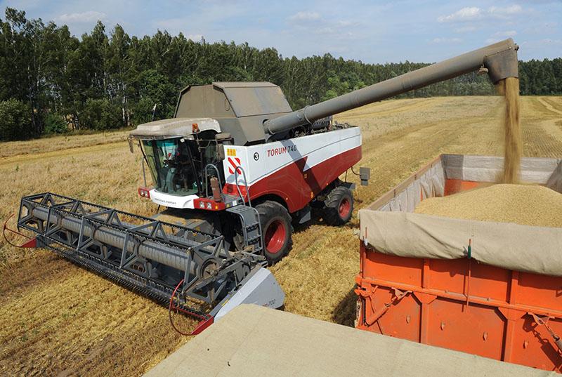 Во время уборки урожая зерновых