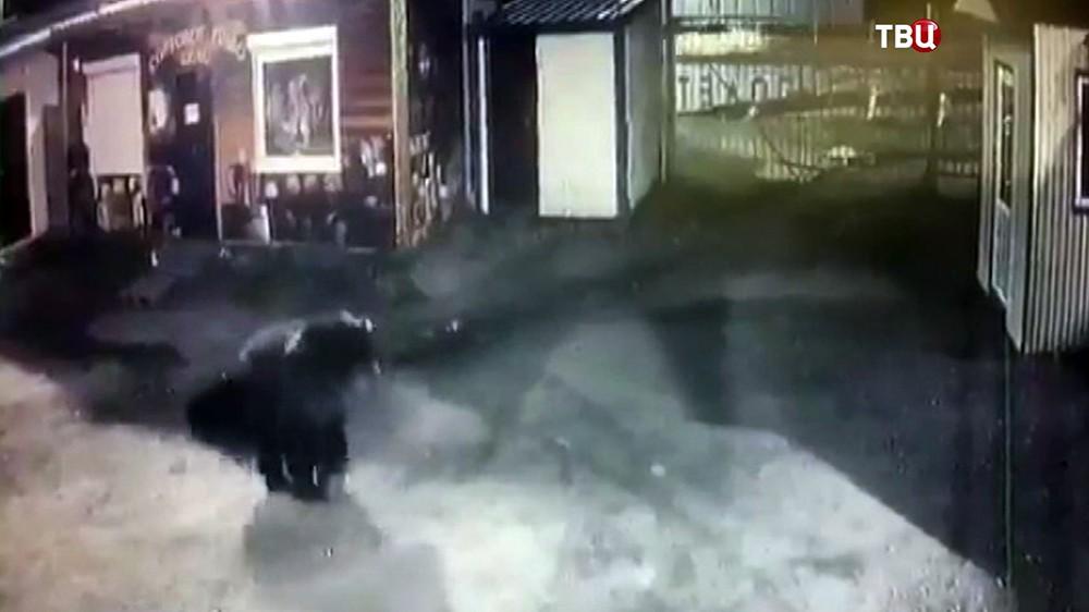 Медведь на улице города