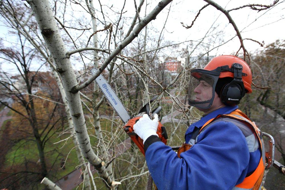 Омолаживающая обрезка деревьев в столице