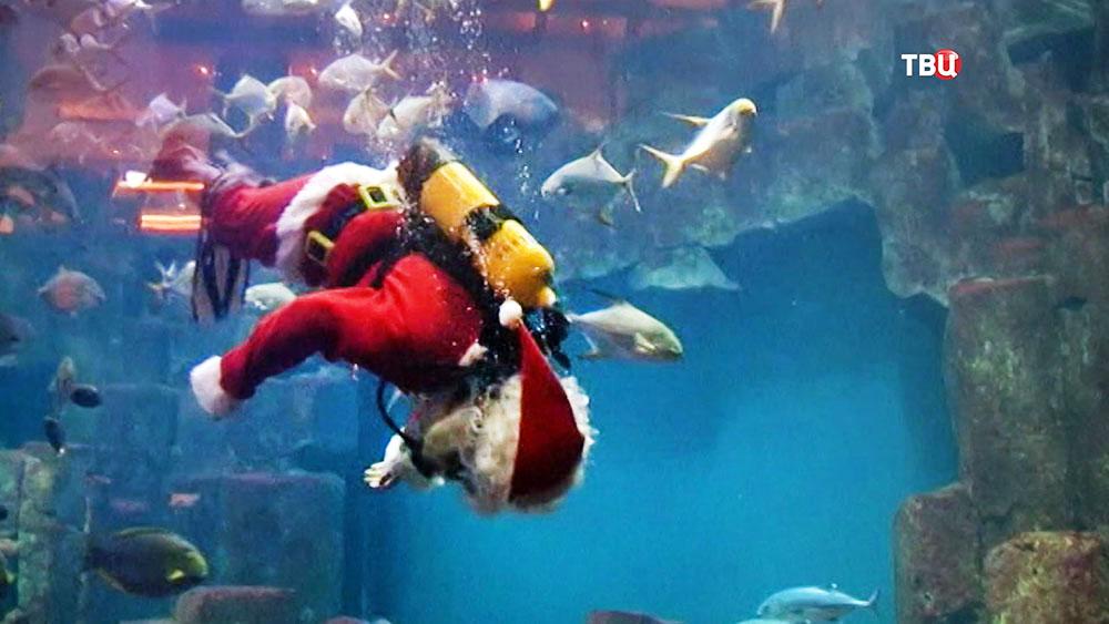 Санта Клаус плавает в аквариуме с рыбами