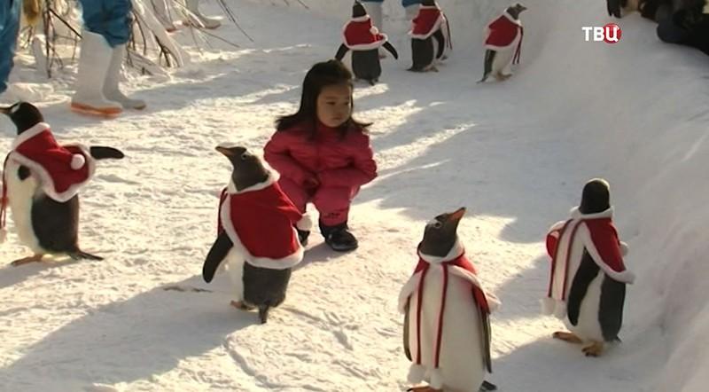 Переодетые в Санта-Клаусов пингвины