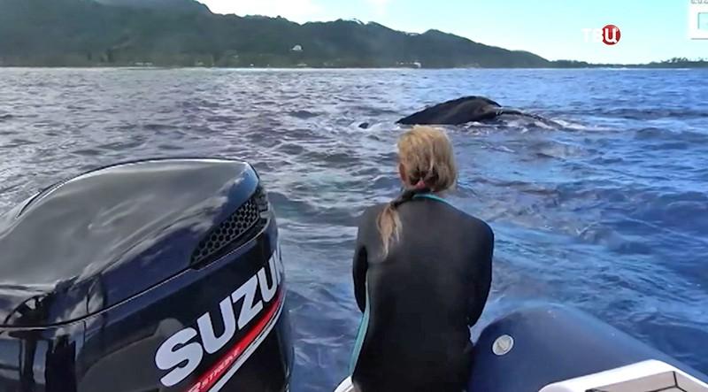 Кит в Тихом океане