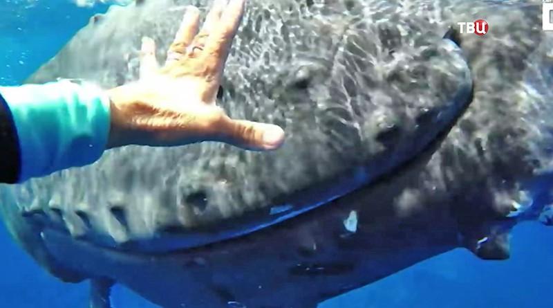 акульи плавники на лодку