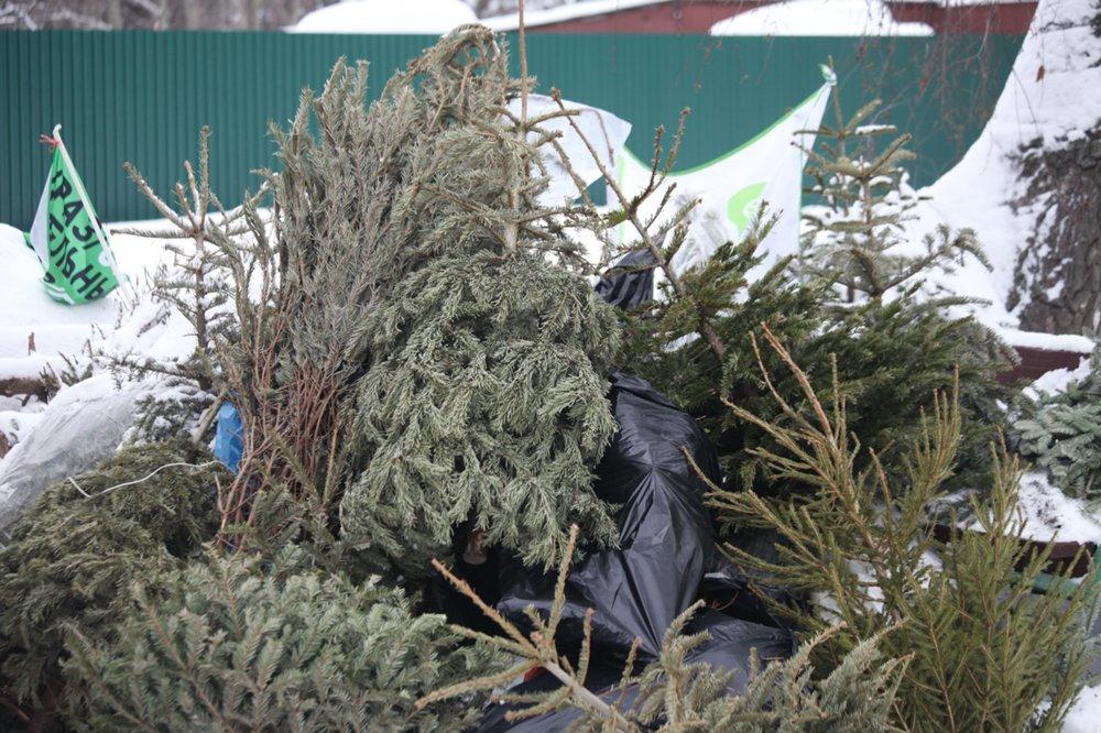 Пункты утилизации новогодних елок вМосковском регионе будут работать доконца февраля