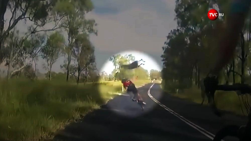 Кенгуру на лету сбил велосипедистку в Австралии