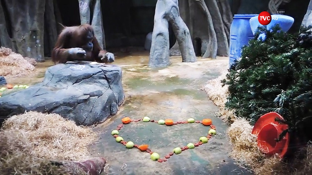 День всех влюбленных d Московской зоопарка