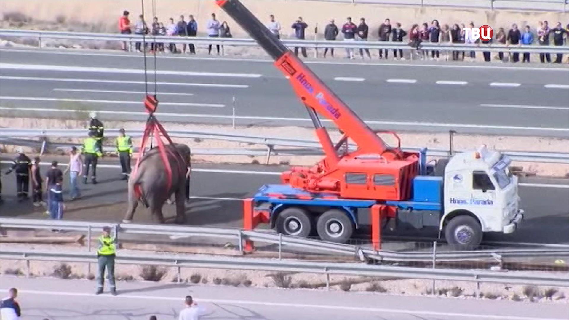ДТП с участием слонов в Испании
