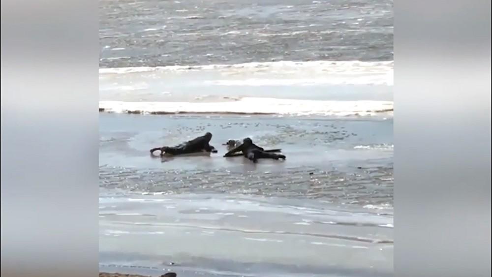 Спасение собаки в Хабаровске