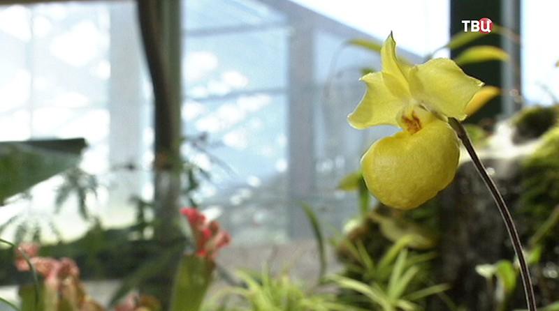 Вся правда про орхидеи. Кто они вампиры или доноры?