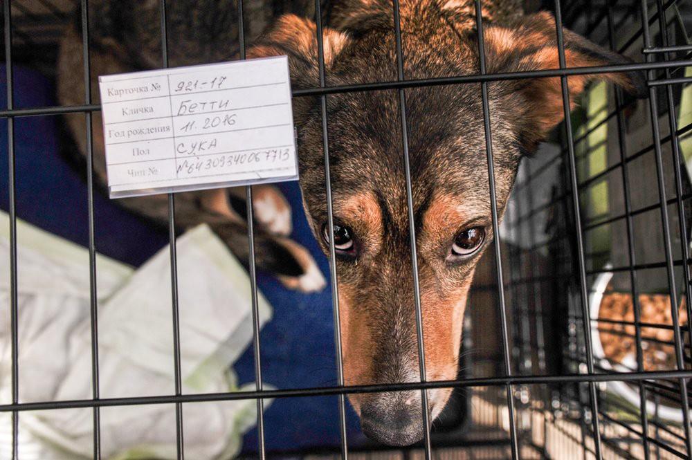 Бездомные собаки в клетках