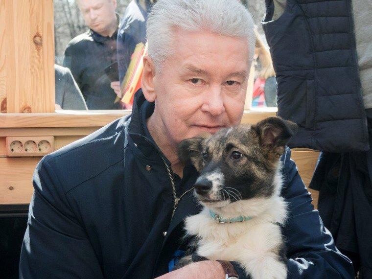 Мэр Москвы Сергей Собянин с собакой Джоуи