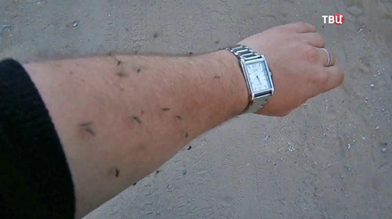 Нашествие комаров в Воронежской области