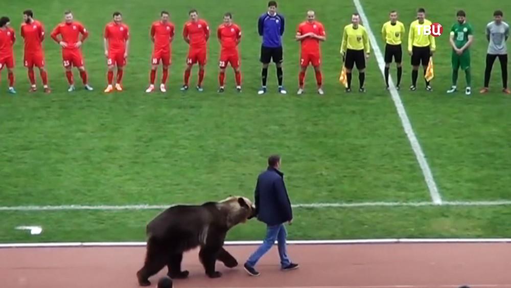 Провод медведя перед футбольной командой