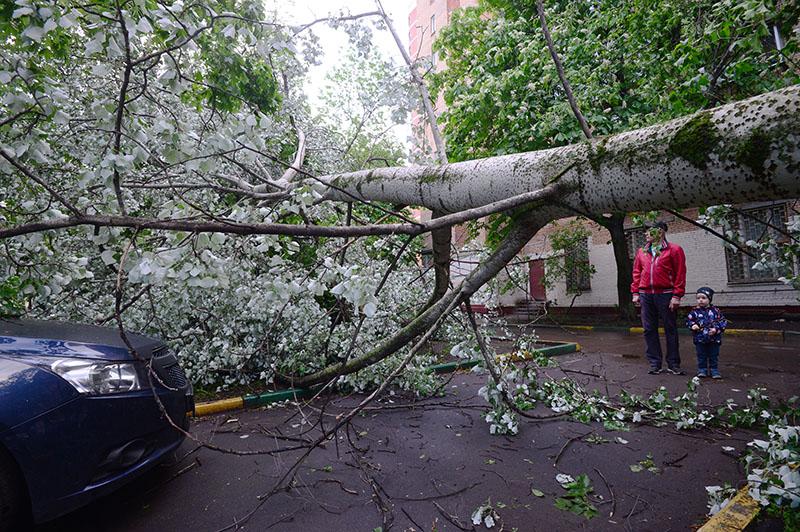 Сломанное ураганом дерево во дворе жилого дома