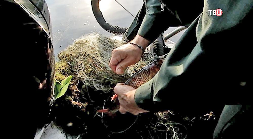 Инспекторы Мосприроды извлекают из водоёмов ловушки