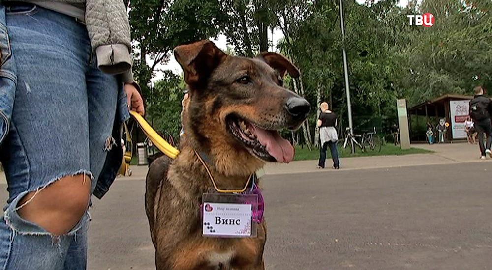 """Выставка собак из приютов в парке """"Кузьминки"""""""