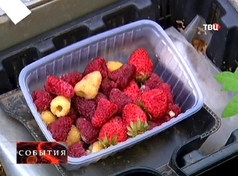 Плоды клубники и малины выращенные в теплице