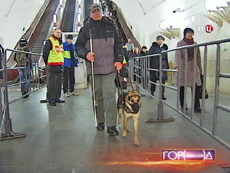 Собака-повадырь с хозяином в метро