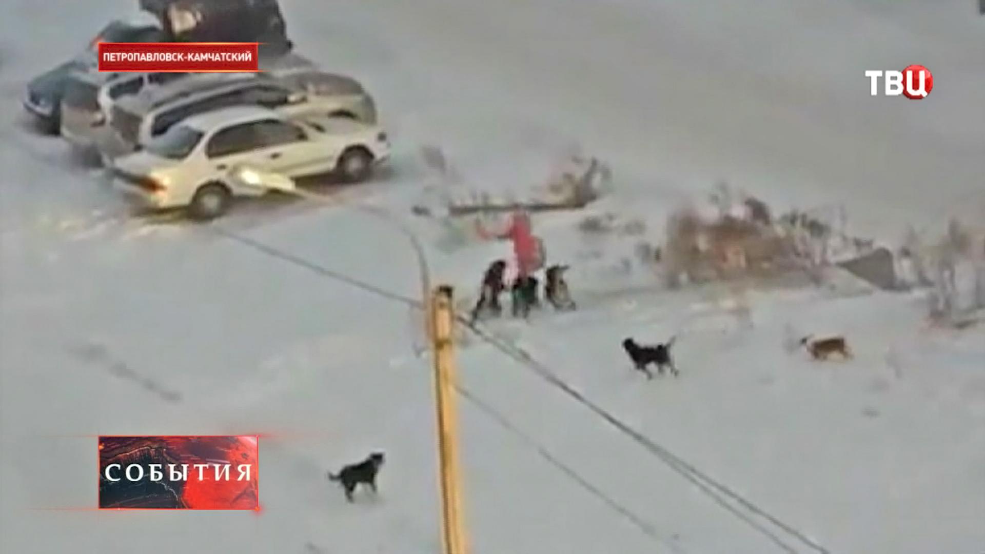 Бездомные собаки нападают на человека