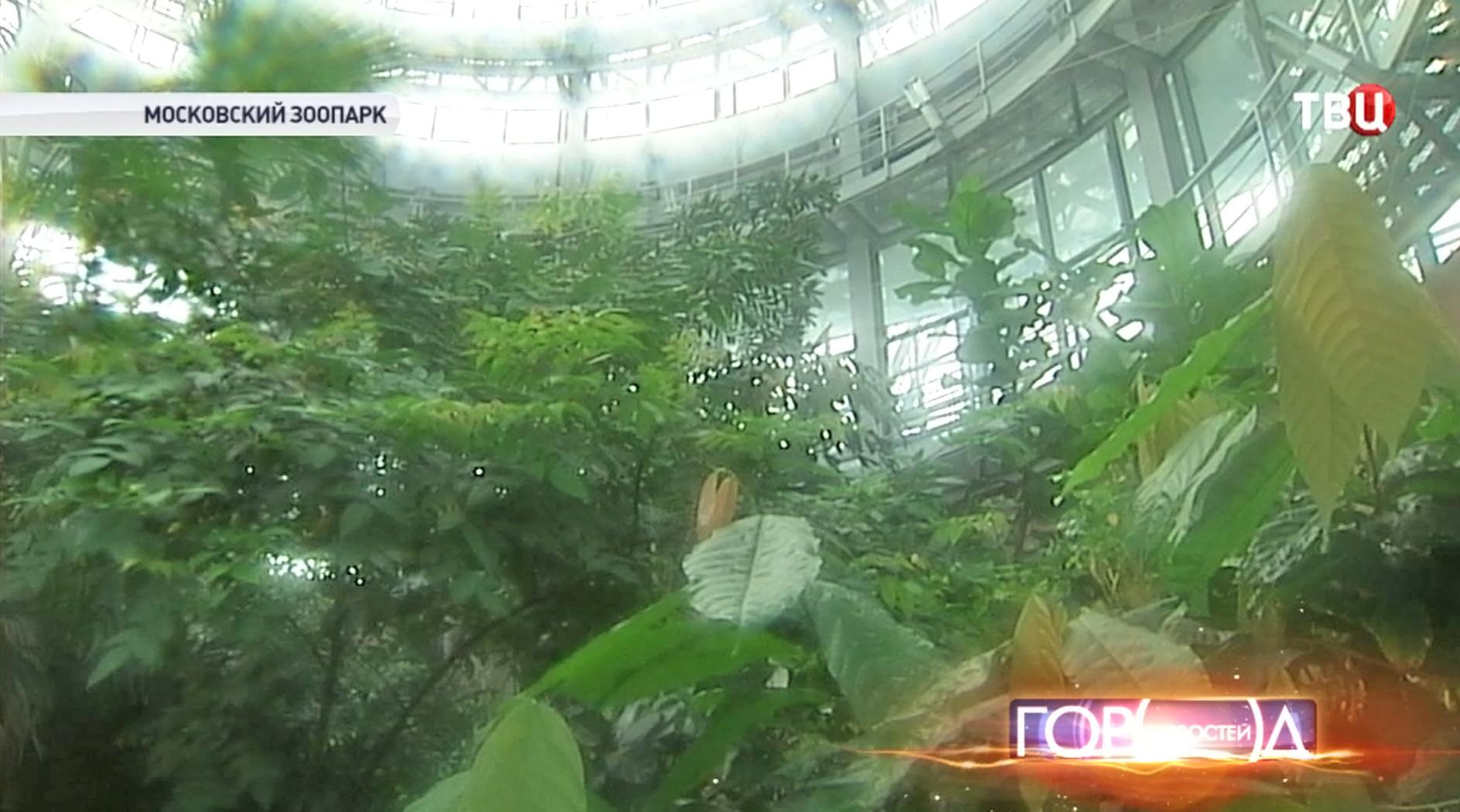 Оранжерея в Московском зоопарке