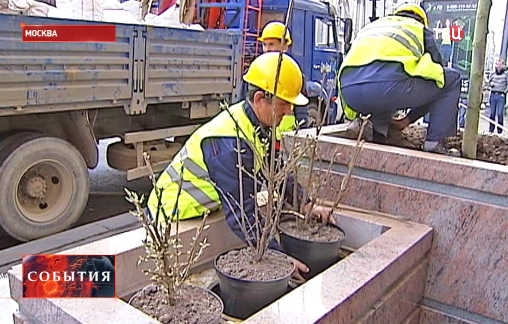Коммунальщики сажают деревья