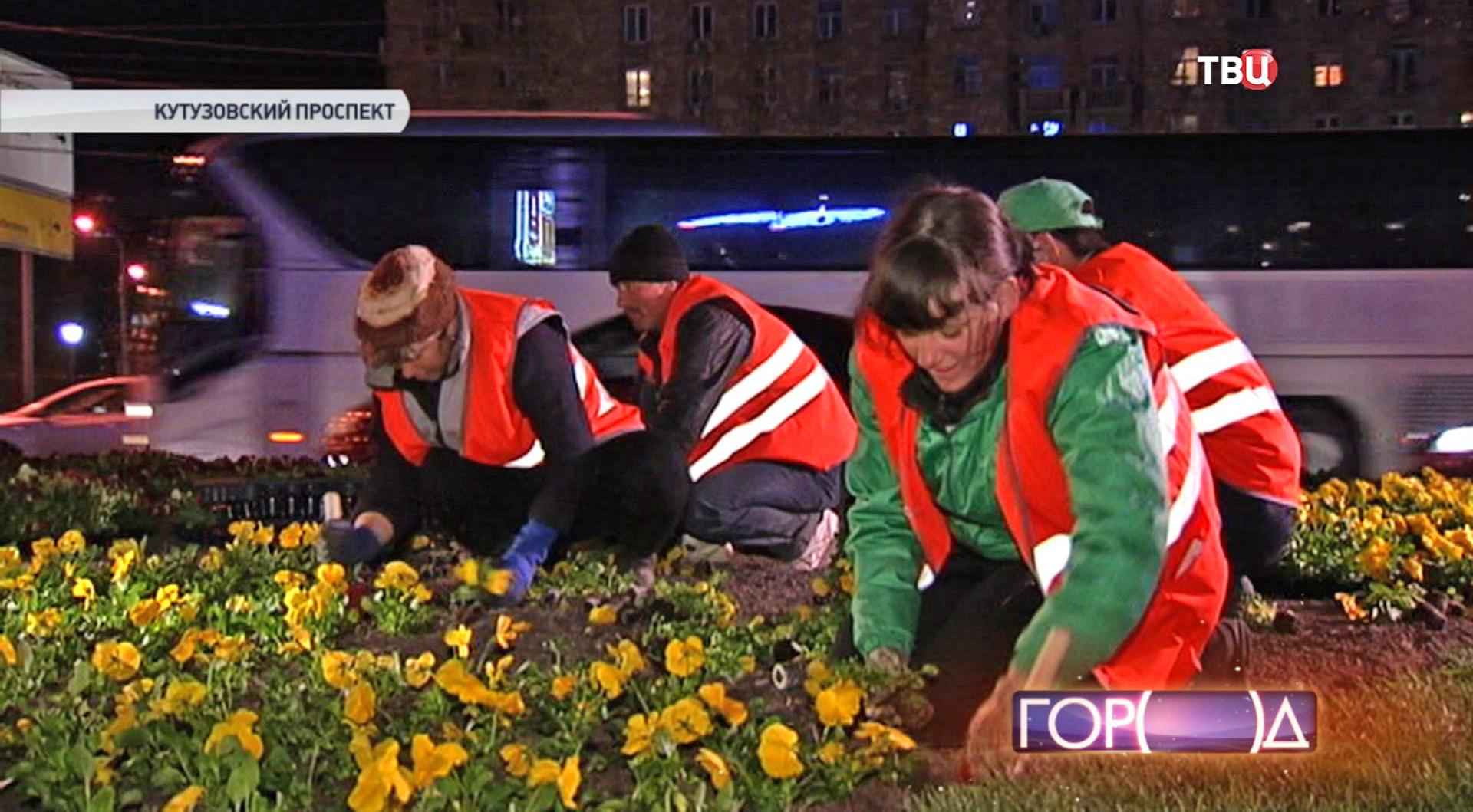 Посадка цветов на Кутузовском проспекте