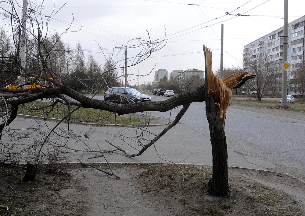 Сломанное дерево на одной из улиц Омска