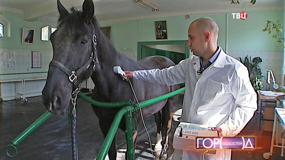 Ветеринар обследует лошадь