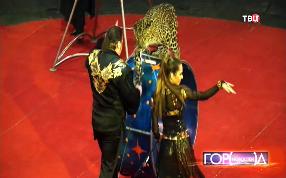 Цирковые дрессировщики с леопардом