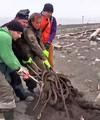 Спасатели МЧС и волонтеры убирают мусор на берегу моря
