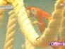 Красная ара в Московском зоопарке