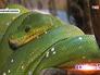 Змея в экзотариуме московского зоопарка