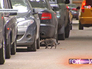 Припаркованные вдоль тротуара автомобили