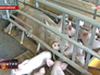 Свиная ферма