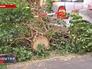 Поваленное дерево в Германии