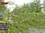 Поваленное дерево в Китае